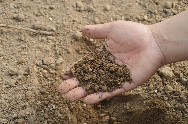 půda - Jak zjistit pH půdy? Je to velice jednoduché