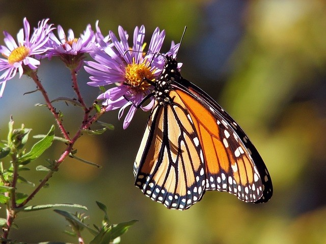 motýlek - Zahrada pro motýly