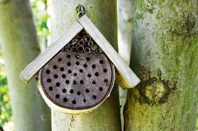 včela úl - Zahrada pro včely