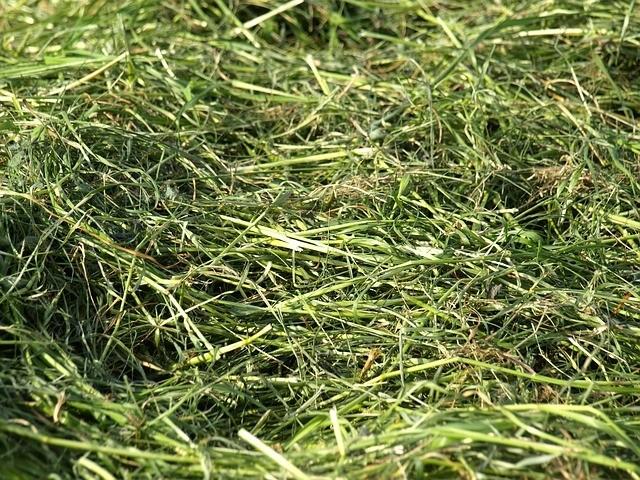 kompost tráva - Pečujte o půdu tím, že jí dopřejete živiny