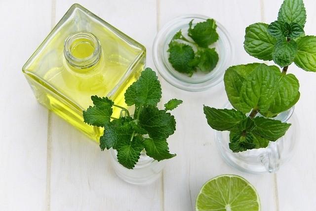 mátový olej - Máta je naše oblíbená bylinka. Jak ji můžeme využít