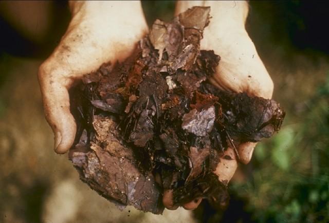 organické hnojení - Sedm věcí, které potřebujete vědět, abyste začali kompostovat