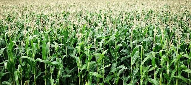 rotace plodin - Víte, co znamená rotace plodin a jaký vliv má na kvalitu půdy?