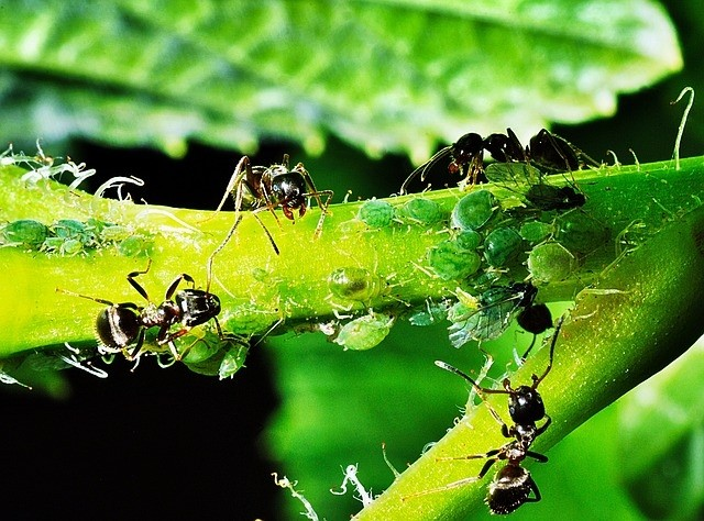 marvenci - Mít na zahradě mravence, může být také výhodné