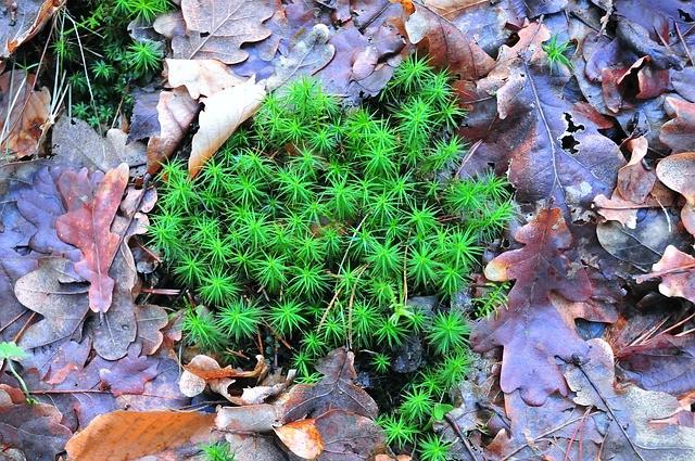 moss 2571713 640 - Každý rok bojujete s mechem v trávníku?