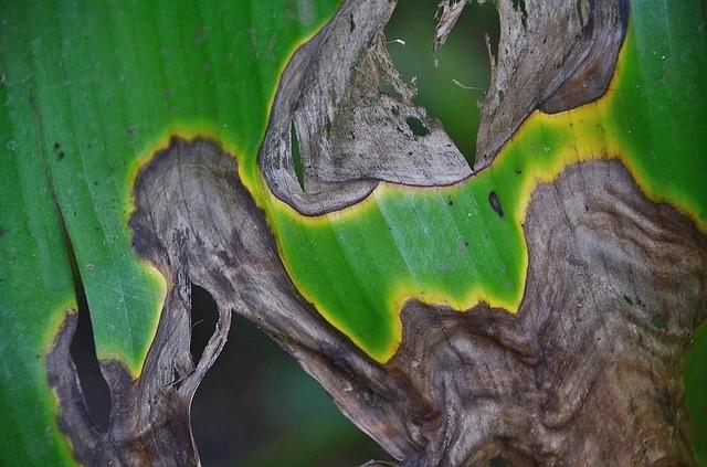napadená rostlina - Jací škůdci ničí vaše pokojové rostliny