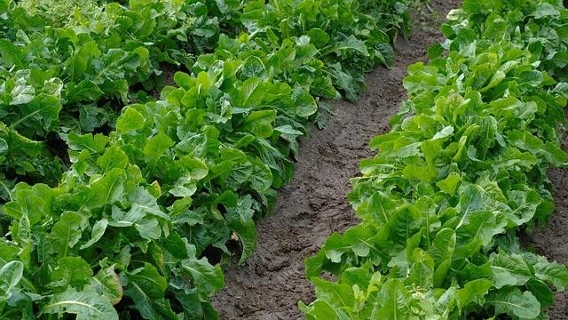 záhon zeleniny - Jak vytvořit hezkou zahradu k vašemu domu? Co by měla obsahovat
