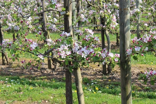 sad - Proč si vybrat sloupovité stromky