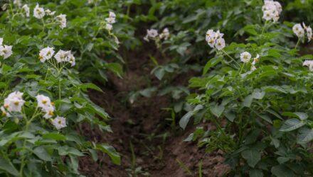 pesticidy t 440x250 - sazenicka.cz