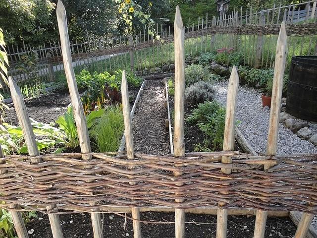 bylinková zahrada - Které bylinky se spolu snesou a které ne