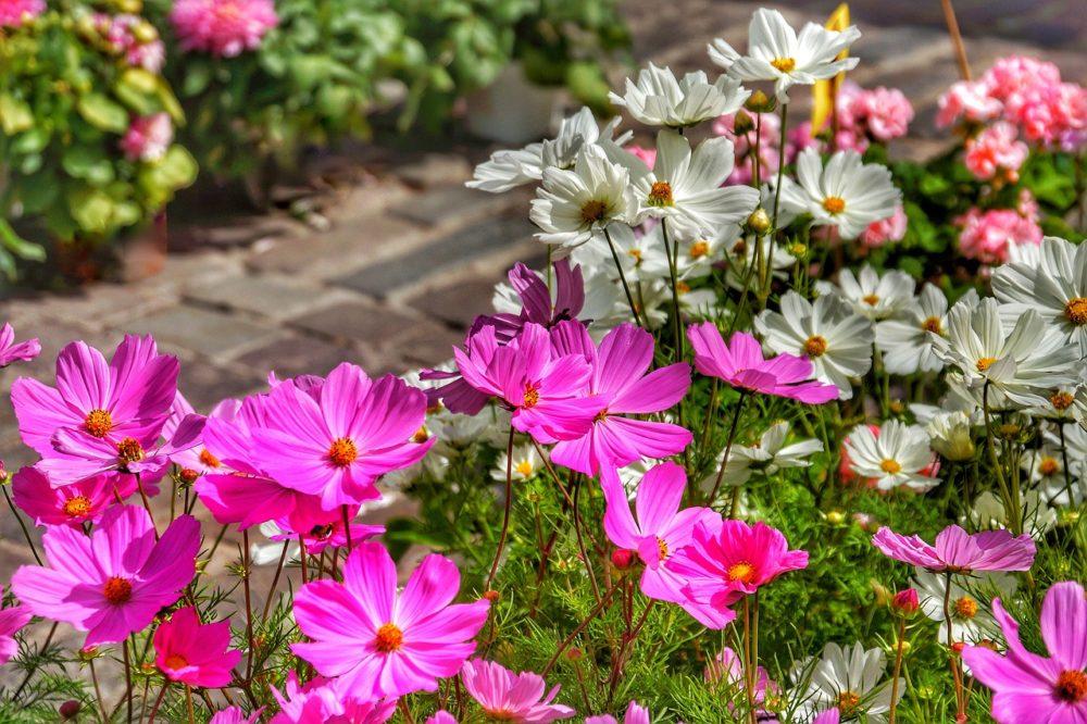 zahrádka zahradní háj