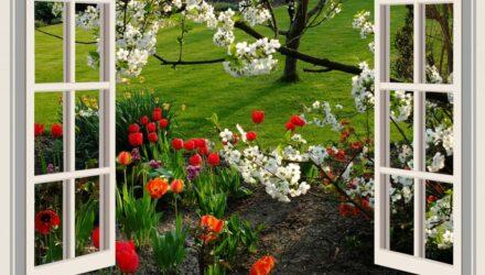 květiny - výhled z okna