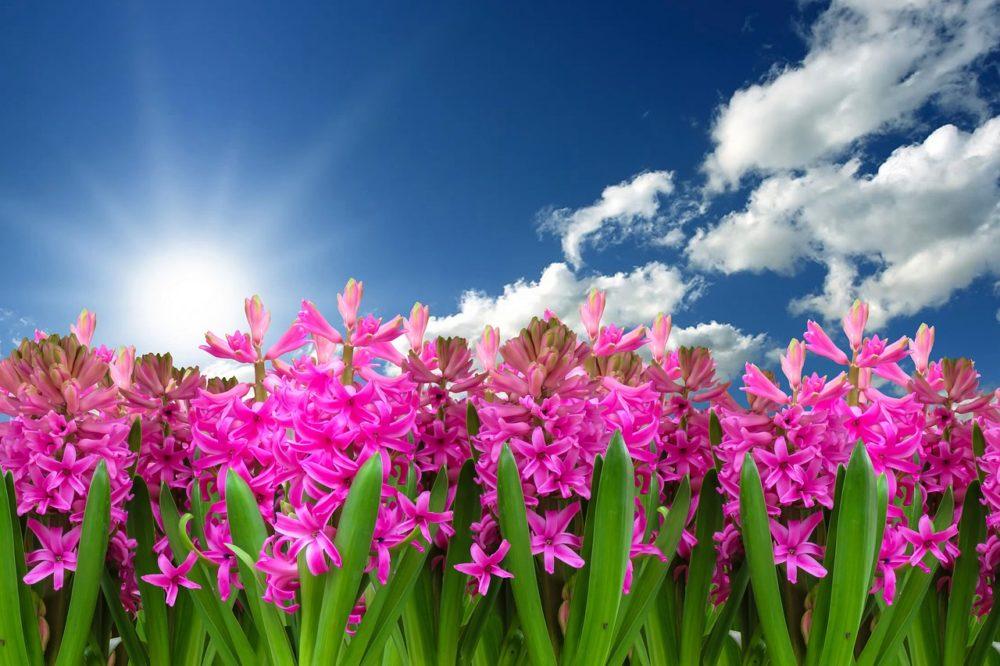 Výsledek obrázku pro obrázky jarních květin