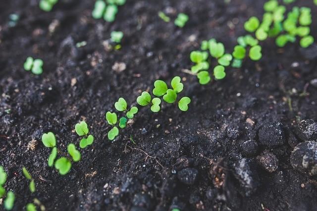 pěstování zeleniny - Pěstujte si zeleninu z vlastních semínek. Poradíme vám, jak semínka získat a dále skladovat