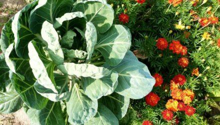 záhony zeleninové