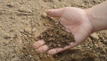 organická půda