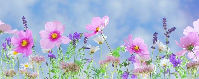databaze květin - Databáze rostlin