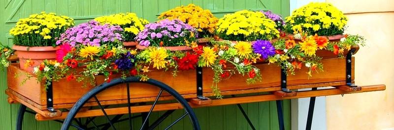 vozik - Katalog podniků