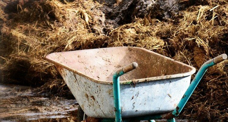 použití hnoje
