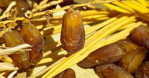 datlová palma - Jak si vypěstovat datlovou palmu z pecky