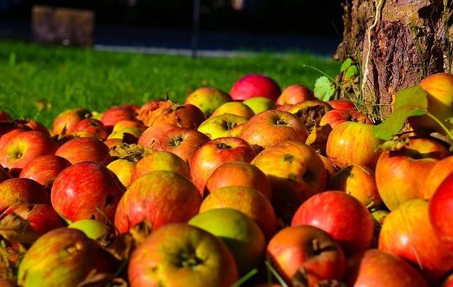 jablon - Naši nejčastější škůdci jabloní - znáte je?