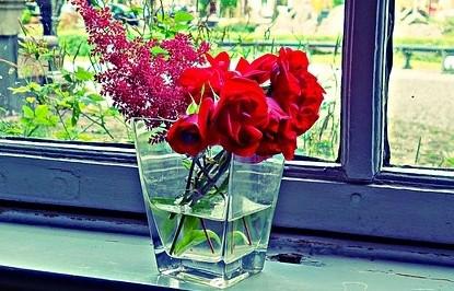 květiny ve váze - Jak vybrat správnou květinu pro ženu a dále o ní pečovat