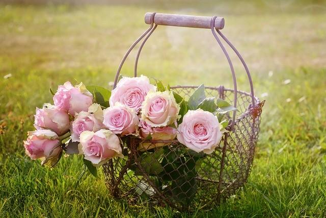 růže - Nejčastější choroby růží? Víme, jak je poznat