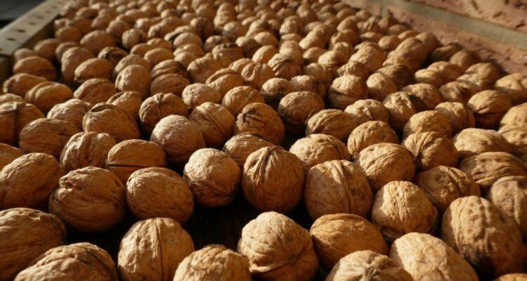 vlaěský ořech