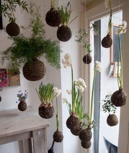 kokedami - Kokedami, pokojovka, která nepotřebuje květináč. Návod na výrobu