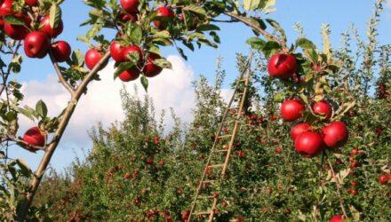 ovocna zahrada t