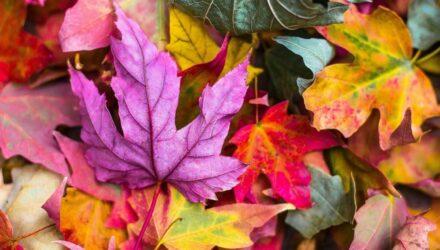 podzim t