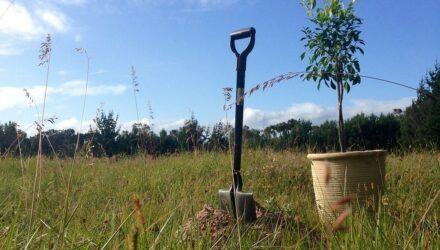 výsadba stromů t