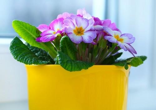 zálivka - Jak správně zalévat rostliny v květináčích?