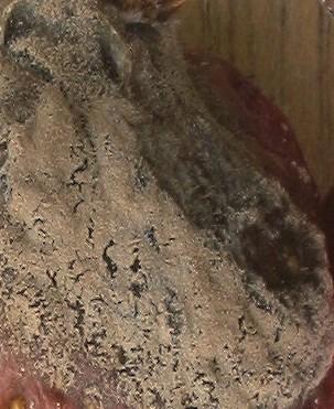 cibule plíseń šedá - Jak chránit cibuli před šedou hnilobou, cibulovou mozaikou a bakteriální hnilobou při skladování?
