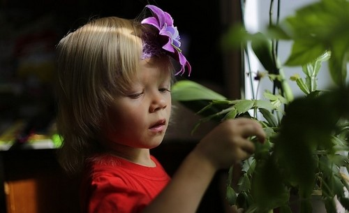 dětský poko - Pokud chceme mít rostliny v dětském pokoji, bereme v úvahu bezpečnost dětí