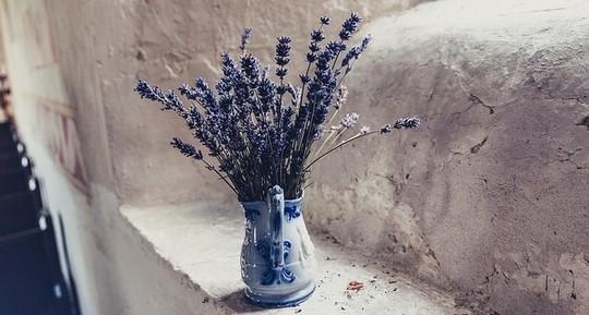 lavendule - Vyrobte si domácí levandulový olej – pomůže na mnohé neduhy