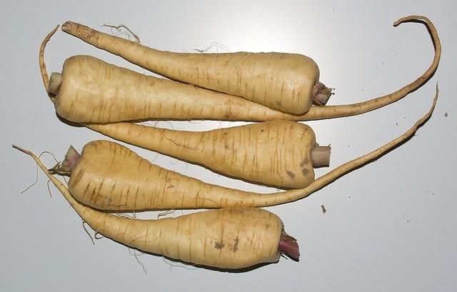 pastinak - Zelenina pod sněhovou přikrývkou aneb co pěstovat a sklízet v zimě?