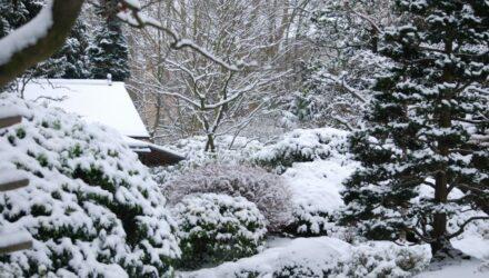 prace na zahrade v zime