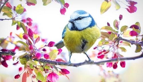 pták - Chcete-li fungující zahradu, musíte do ní nalákat určité živočichy