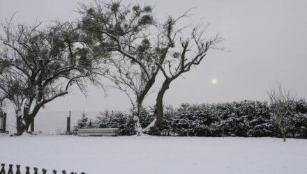 sníh na zahradě t