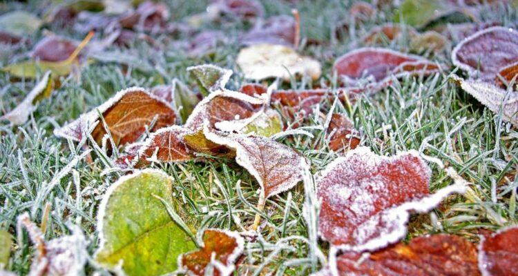 tráva v zimě
