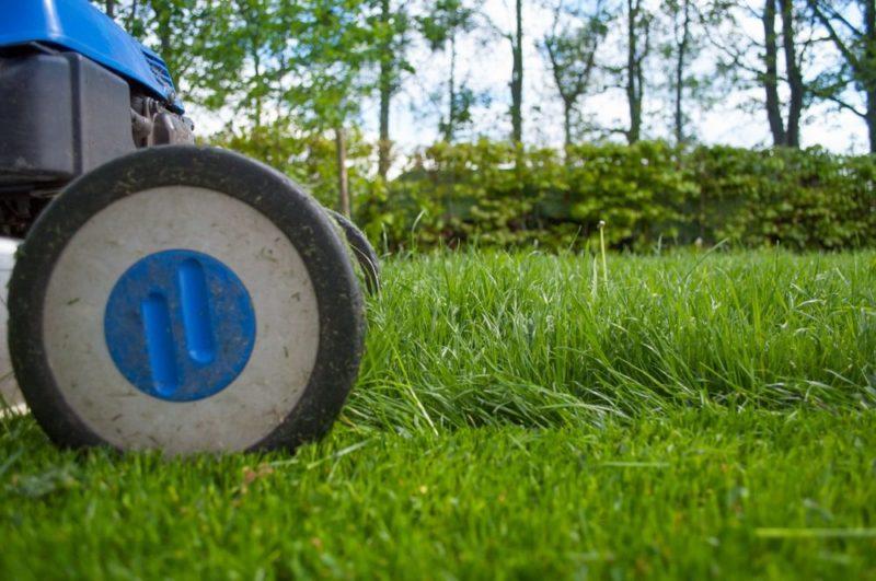 travnik 2 e1545514885446 - Co vše je třeba k obnově trávníku. Jaký je vhodný postup