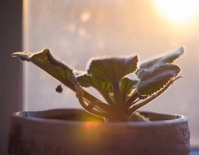 zima pokojovky - Péče o pokojové rostliny v chladném počasí je důležitá. Jaká pravidla brát v úvahu?