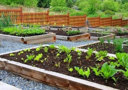 komunitni zahrada
