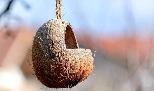 krmítko - Vyrobte si originální tukové koule pro ptáčky a děti si užijí zábavu