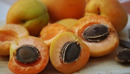 meruňky tt