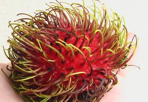 ovoce - Rambutan – proč ochutnat toto exotické ovoce? Pomůže nejen při hubnutí