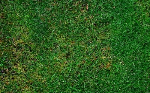 poškozený trávník - Jak vybrat správnou travní směs a jak se bránit chorobám trávníků