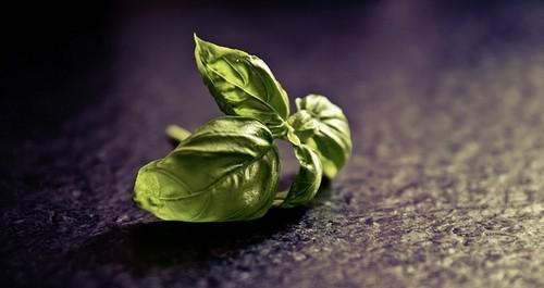 rostlinka - Víte, jak na správné řízkování? Dodržujte několik zásad a úspěšnost bude vysoká