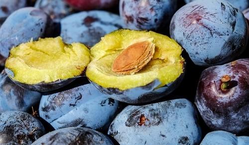 svestka - Vybíráme vhodnou odrůdu švestky do zahrady. Co by nás mělo zajímat